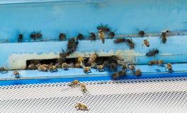 Abejas que entran en la colmena de la abeja Imagenes de archivo