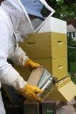 Abejas que fuman del apicultor Imagen de archivo libre de regalías