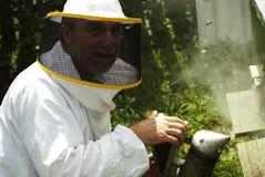 Abejas que fuman del apicultor maduro en colmena Imágenes de archivo libres de regalías