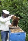 Abejas que hacen la miel Imagen de archivo