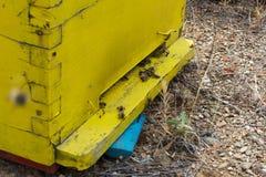 Abejas que vienen dentro y fuera de su colmena amarilla Cierre de la colmena de la abeja para arriba Abejas de la miel que pulula Fotos de archivo libres de regalías