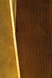 Abejas, que vienen a partir del invierno crudo Fotografía de archivo libre de regalías
