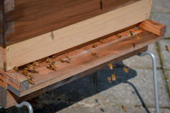Abejas que vuelan alrededor de la colmena de madera Fotos de archivo