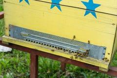 Abejas que vuelan delante de la entrada de la colmena Foto de archivo