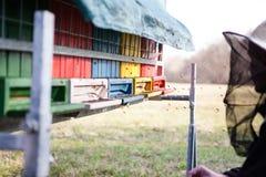 Abejas que vuelan en la colmena Fotografía de archivo libre de regalías