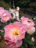 Abejas rosadas de las rosas y de la miel Imagen de archivo