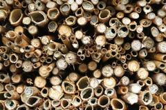 Abejas salvajes que se sientan en los palillos de la jerarquía del refugio del insecto solitario Imágenes de archivo libres de regalías