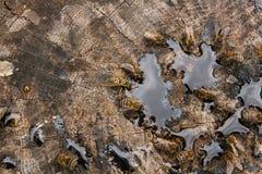 Abejas y avispa que pululan en gotas de la miel en backgrou de madera del vintage Imagen de archivo