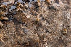 Abejas y avispa que pululan en gotas de la miel en backgrou de madera del vintage Fotos de archivo libres de regalías