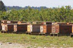 Abejas y cajas el pulular Foto de archivo libre de regalías