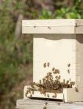 Abejas y colmena italianas de la miel Imágenes de archivo libres de regalías
