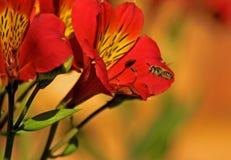 Abejas y flores   Foto de archivo