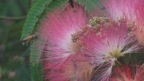 Abejas y flores Fotografía de archivo libre de regalías