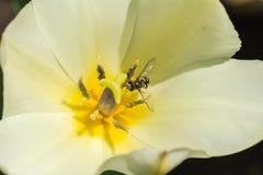 Abejas y flores Fotografía de archivo