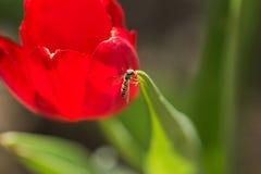 Abejas y flores Fotos de archivo