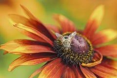 Abejas y flores Fotos de archivo libres de regalías