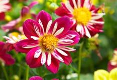 abejas y flores brillantes Imágenes de archivo libres de regalías