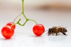 Abejas y fruta Imagen de archivo