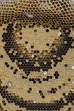 Abejas y miel Imagen de archivo