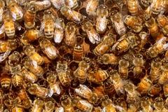 Abejas y miel de la colmena Fotos de archivo libres de regalías