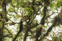 Abejas y panal salvajes en el árbol Foto de archivo