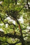 Abejas y panal salvajes en el árbol Fotos de archivo