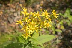 Abejorro que recoge el polen en una flor en el parque Fotos de archivo