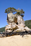 Abel Tasman national park, New Zealand Stock Images