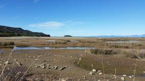Abel Tasman Park på lågvatten Arkivfoto