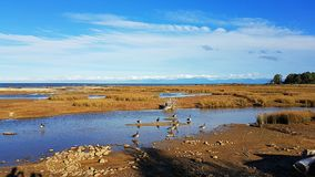 Abel Tasman parka narodowego punktu widzenia obrazek obrazy royalty free