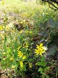 abelha da flor imagem de stock