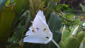 Abelha dentro da flor fotografia de stock royalty free