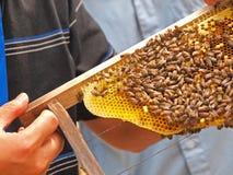 Abelha do mel imagem de stock
