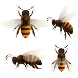 A abelha do mel isolou os ícones ajustados Foto de Stock