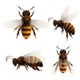 A abelha do mel isolou os ícones ajustados ilustração do vetor