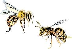 Abelha e vespa no fundo branco Imagens de Stock Royalty Free