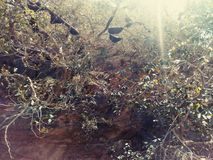 Abelha em Sun Ray Imagens de Stock Royalty Free