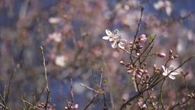 Abelha em uma flor filme