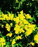 Abelha em uma flor bonita Imagem de Stock Royalty Free