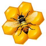 Abelha em uma parte do favo de mel ilustração stock
