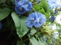 Abelha-flor combinado fotos de stock royalty free