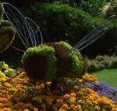 Abelha gigante da flor Fotografia de Stock