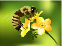 Abelha na flor ilustração do vetor
