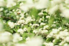 Abelha nas flores foto de stock