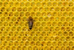 Abelha no favo de mel imagem de stock