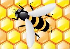 Abelha nos favos de mel Ilustração do Vetor