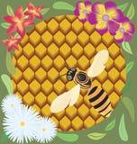 Abelha nos favos de mel. Foto de Stock