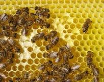 Abelha nos favos de mel do cinza. Imagens de Stock