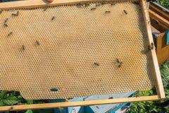 Abelha-quadro com favos de mel Imagens de Stock Royalty Free