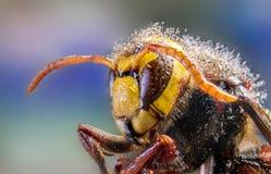 Abelha, troca, mel, insetos da flor do fundo Fotografia de Stock Royalty Free